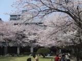 2008_04hiroshima06