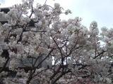 2008_0420zouhei01